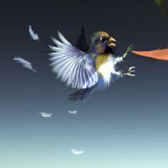 #bird Xoan Baltar