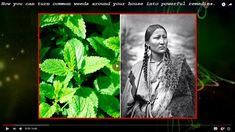 12 Medicinal Plants the Native Americans Used To Cure EVERYTHING
