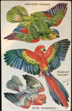 Vintage Postcard - Parrots by KarRedRoses on DeviantArt Bird Illustration, Illustrations, Vintage Birds, Vintage Art, Amazon Parrot, Belle Epoque, Animal Sketches, Cockatoo, Fauna