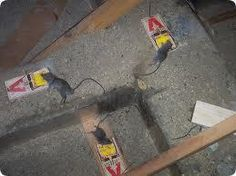 1000 Images About Rat Poison On Pinterest Poisons Rats