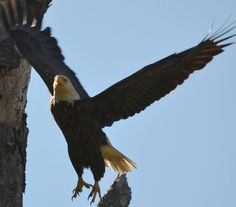 eagle fly off 555 by jetskibrian