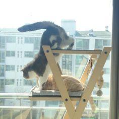 고마운 맑은 날 . #cat #윤두부 #윤통키 #두통남매 #두부왕통키 #같이소풍가고싶다 . by dooboo_cat