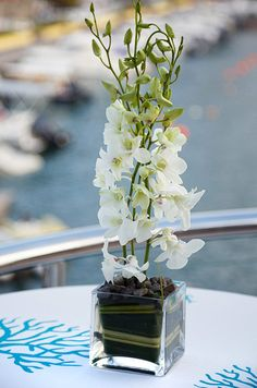 A white orchid centerpiece is a mix of buds and blooms at this outdoor beach wedding.