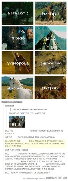 Bill the pony for president of middle earth!