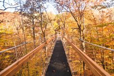 What a beautiful, unique way to take in the fall foliage during the autumn months. The Judith and Maynard H. Murch Canopy Walk at Holden Arboretum in Kirtland, Ohio features a 500 ft. long elevated walkway suspended 65 ft. above the forest floor. It gives visitors a truly unique perspective of the forest and the animals that live among the trees.