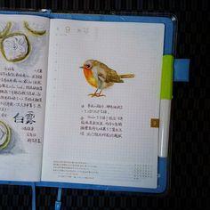 @itomayuki - 今天同事徒手抓了只鸟,后来的事实证明这位鸟先生(女士?)十分健康因为他愤而越狱了,身手矫健。不... - EnjoyGram