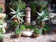 Succulent filled fountain and strawberry jars. July 2013
