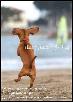 happy dance at the beach ~ Dachshund Dachshund Funny, Dachshund Love, Funny Dogs, Funny Animals, Cute Animals, Daschund, Baby Animals, Dachshund Quotes, Love My Dog