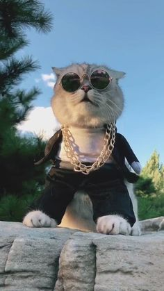 Funny Cute Cats, Funny Kittens, Cute Cat Gif, Cute Funny Animals, Kittens Cutest, Funny Cartoon Gifs, Funny Animal Videos, Funny Videos, Cat Emoji