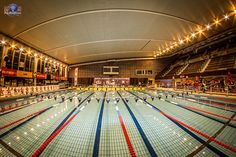 "Lyon Natation, sign up under ""loisirs enfant"""