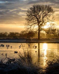 Bushy Park - Sunday 25 Jan 2015 - East Molesey and Hampton Court Area in Surrey, shops, restaurants, bars, walks, parks.