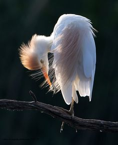 feathers by claire  de neufville on 500px