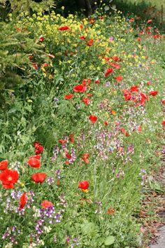 Small garden ideas - wild flower boarder