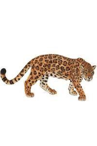 Jaguar $7.95