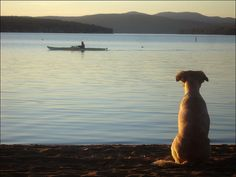 Ah, patience. I used to take Zephyr & Shadow kayaking. If I got too far from the shore, they'd swim after me. xo