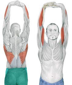 In our previous article The Art of Stretching we presented 36 illustrations in color with stretches for specific muscles. We now continue with more illustrations Body Stretches, Stretching Exercises, Full Body Stretch, Sup Yoga, Muscle Anatomy, Abdominal Exercises, Senior Fitness, Human Anatomy, Massage Therapy