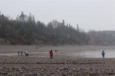 The beach at Wasson Bluff along the Bay of Fundy in Nova Scotia. Rich in fossils and minerals. An awesome place to hike along the beach and cliffs.