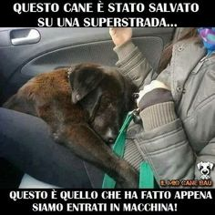 Appena adotto in canile True Friends, Dog Friends, I Love Dogs, Cute Dogs, Animals And Pets, Cute Animals, Big Dog Little Dog, Short Dog, Tallest Dog