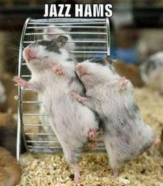 hamsters dancing cute!