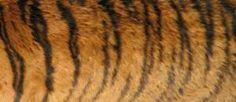 dieren met textuur - Google zoeken