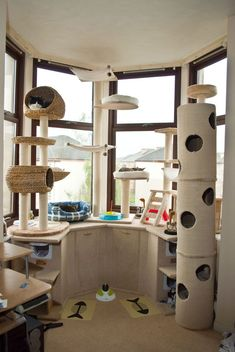 Cat Room | Could then be connected to a catio, and a small snuggly corner with wall steps/shelving. #CatRoom