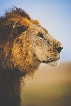 This is my king, the lion of the tribe of Judah., my savior.