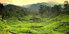 Gorgeous Kerala (5 Days / 4 Nights)  Link:  http://www.wowholidays.in/product/gorgeous-kerala-2/