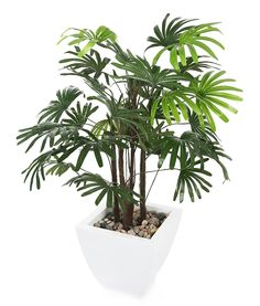 Closer to Nature Artificial 3ft Lady Palm Tree - Artificial Silk Plant and Tree Range * Quickly view this special  product, click the image (This is an amazon affiliate link. I may earn commission from it)