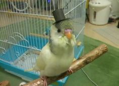 Chester would have totally done this to Ollie if he had known about tiny top hats.