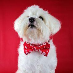 Christmas Dog Bowtie Collar, Festive Dog Bowtie, Collar Accessories, Dog Dickie Bow, Dog Christmas Gift,Dog Lovers Gift Idea,Handmade Bowtie Dog Christmas Gifts, Dog Bowtie, Doge, Lovers, Unique Jewelry, Handmade Gifts, Etsy, Vintage, Kid Craft Gifts