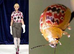 Жуки и мода