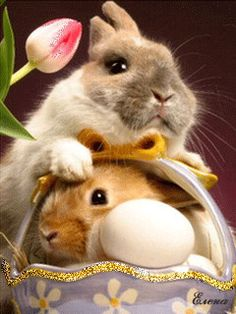 ❁ Two Bunnies, Double the Fun ❁Happy Easter - GIF