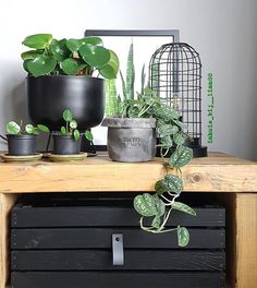 How to Get an Organized, Beautiful Lush Green Garden without Chemicals? Outdoor Plants, Air Plants, Container Plants, Container Gardening, Plant Cuttings, Modern Planters, Office Plants, Green Garden, Lush Green