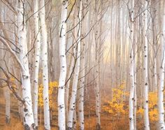 Aspen in Fog Charles Cramer Trees Landscape Picture Decor, 42x36, Gallery Quality Framed Art Print