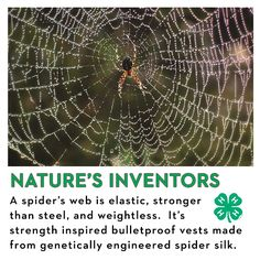 Here's an interesting fact! A spider's web is elastic, stronger than steel, and weightless. It's strength inspired bulletproof vests made from genetically engineered spider silk.  Want more #ScienceSaturday facts and learning? Check this out: http://shout.lt/4QGH