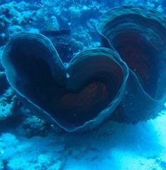 Ocean heart ❤️