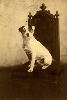 Cachorros da era vitoriana:  http://spitalfieldslife.com/2012/09/19/the-dogs-of-old-london/