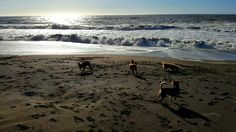 Pups at Sharp Park beach, Pacifica,  California