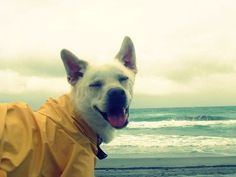 so happy!  Dogs & Great Views, this website makes me want to take Pepper on every vacation