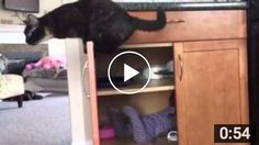 HA-HA-HA-HA this video is sooooo funny!!! #cats #kittens #kitty #LOL #Cute #Pets #Funny http://sheltercatsandkittens.com/this-cat-seeks-more-attention-by-shutting-the-baby-in-the-closet/