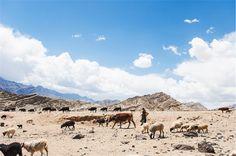 #travel #india #landscape #여행 #인도 #인도여행 #여행사진 #풍경사진 #leh #레 #포토그래퍼 #photographer
