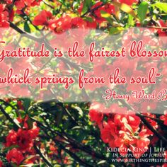"""""""Gratitude is the fairest blossom which springs from the soul."""" -Henry Ward Beecher"""