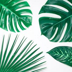 Background By 918evgenij Nature Beach Leaves Background Tropical Fresh Palm Leaves Set Creative Green Summer Design Leaf Background Nature Beach Background ✓ free for commercial use ✓ high quality images. pinterest