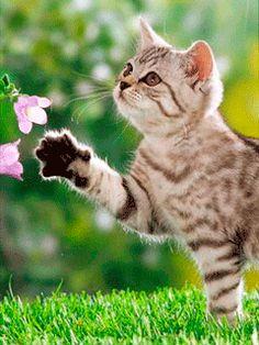 Котейка с цветами (240х320)