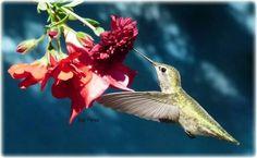 Hummingbird ;)