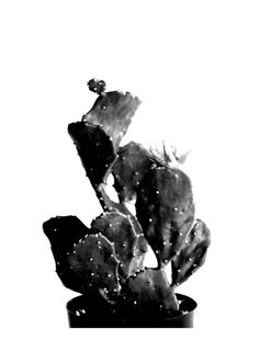 black cactus Wall Art Prints by Baumbirdy | Minted