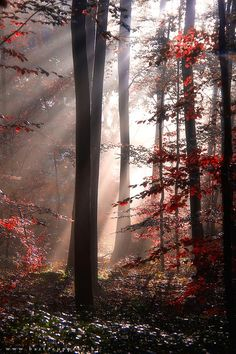 heavenly autumn 4 by Bart Ceuppens