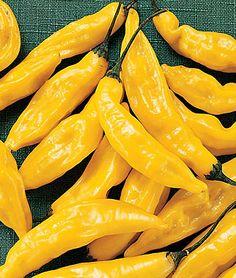 Hot Lemon Pepper, Heirloom.  Indoor Sow, Full Sun.  Would be great for homemade hot pepper jelly!