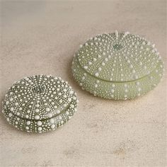Sea Urchin Porcelain Box - Small