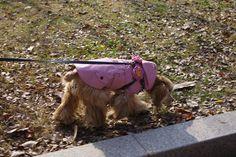 CoCCoLa : 날씨가 대박이었어~ 코콜라 트렌치코트 핑크   중형견옷 코카옷 코기옷 비글옷